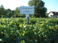 Vignes, Beaumont sur Oise